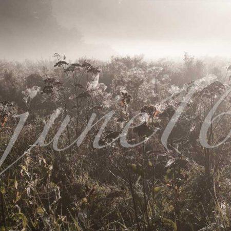 Herbstgräser an einem Oktovermorgen. Gräser im milden Gegenlicht eines Oktobermorgens schaffen ein nahezu monochromes Bild.